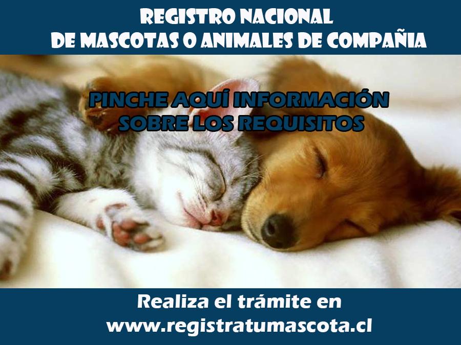 Desde el 6 de marzo esta disponible el sitio www.registratumascota.cl para inscribir a los perros y gatos de compañía.